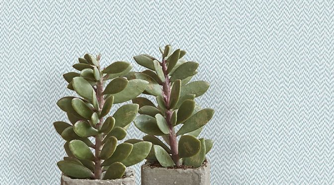 Crown Cotton Tweed Duck Egg Wallpaper – Fresh Ideas